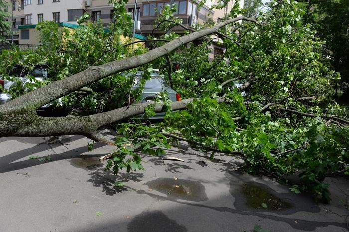 Число погибших урагана в столицеРФ возросло до 2-х